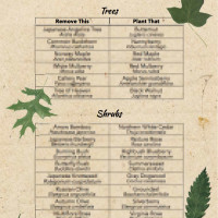 "Native Alternatives to Invasive Plants (5½""x8½"")"