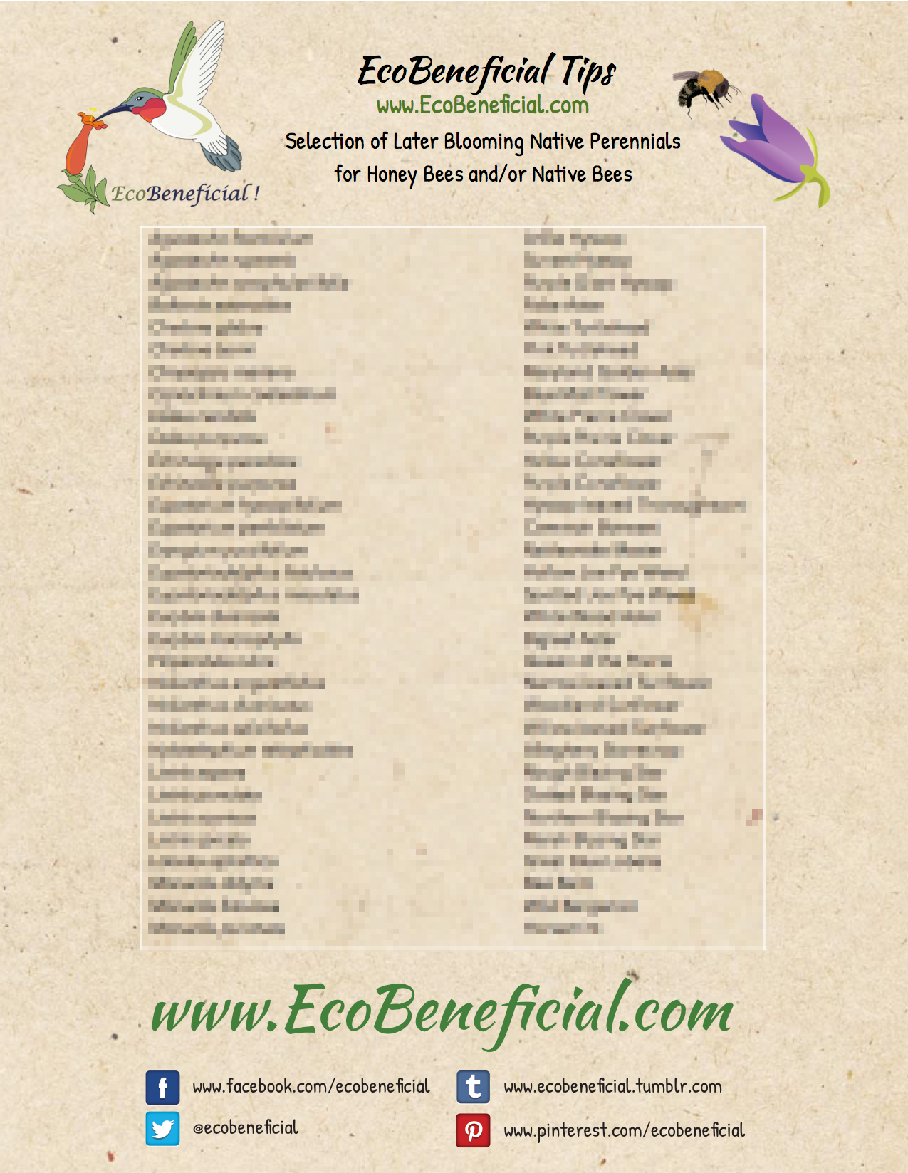 Later blooming native perennials for bees 8 x11 for Homeowner selection sheet