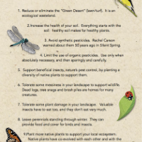 Top_20_Ways_to_Create_An_EcoBeneficial_Landscape