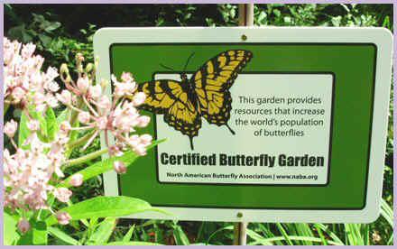 Merveilleux North American Butterfly Association