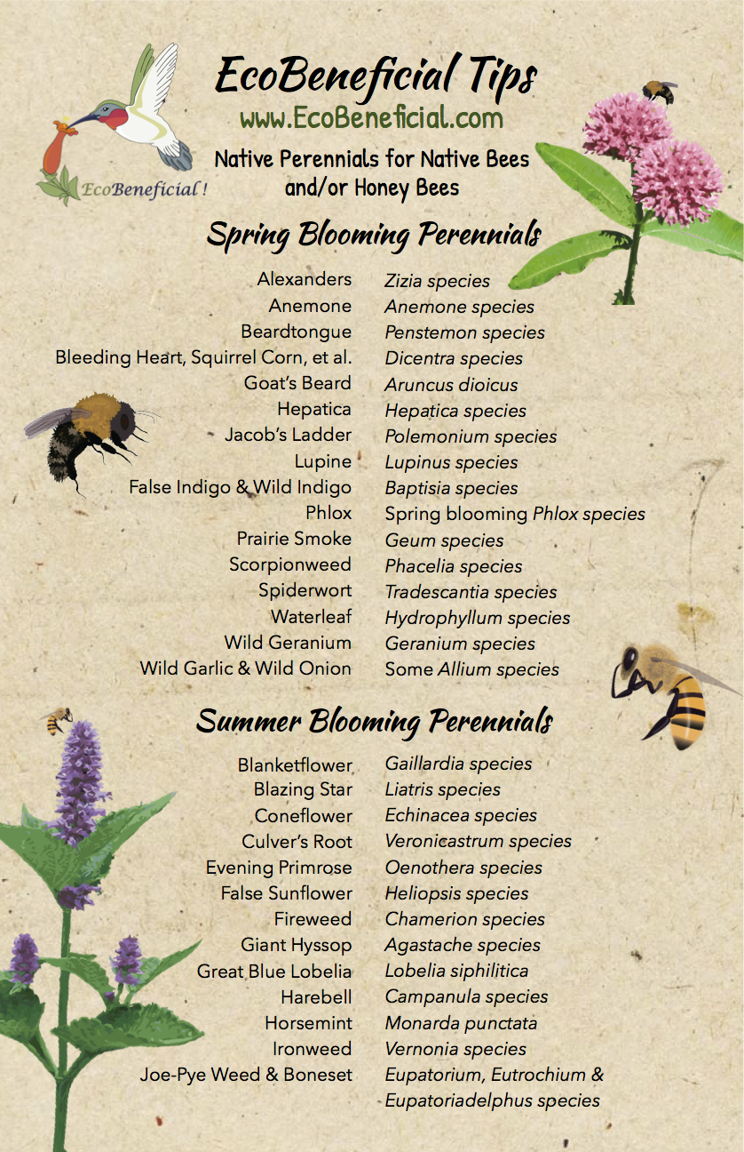 EcoBeneficial Tips Native Perennials for Bees p1
