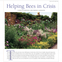 Helping_Bees_in_Crisis