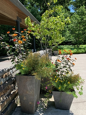 Great Native Plants for Containers Option 1