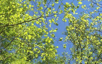 The Power of Leaves to Intercept Rainwater