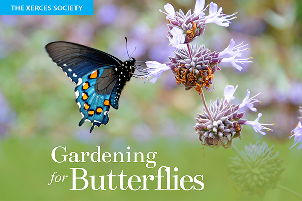 frontpage_gardening-for-butterflies