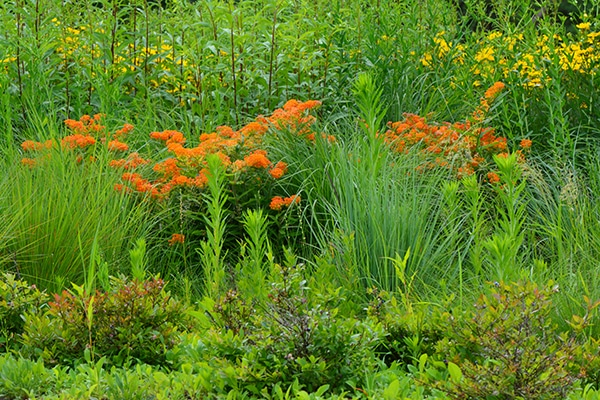 Creating a Succession of Bloom in the Native Garden