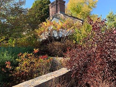 Native Gardening for Fall _ Winter
