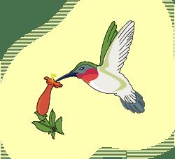 extraglow_hummingbird_logo2@2x