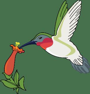 logo_hummingbird