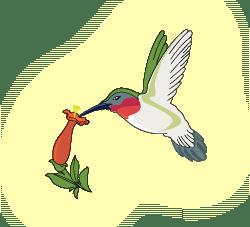 glow_hummingbird_logo2@2x